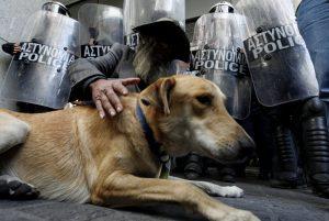 athens-riot-dog