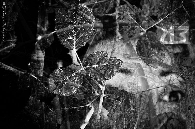 dark_n.jpg