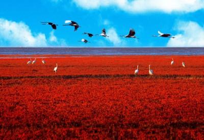 Red-Beach-Panjin-China-Birds-400x274.jpg