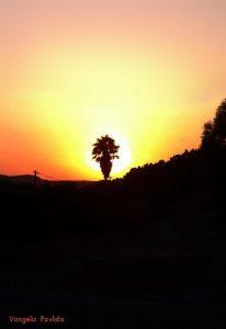 SUNSET-WITH-PALM-TREE.jpg