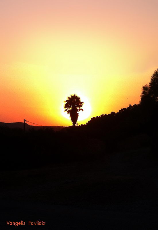 SUNSET-WITH-PALM-TREE.jpg