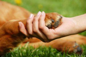 dogs-animals-skulia-anthrwpoi.jpg
