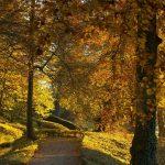 BELGIUM-WEATHERREUTERS2-YvesHerman