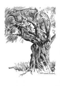 OLIVE-TREE-BB.jpg