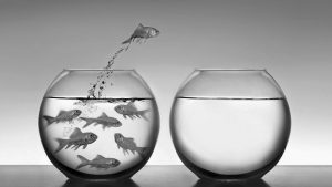goldfish-freedom.jpg