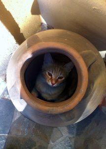 PECULIAR-CAT-A.jpg