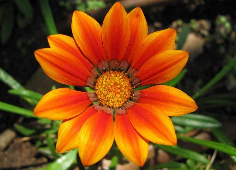 flower-suniporta.gr.jpg