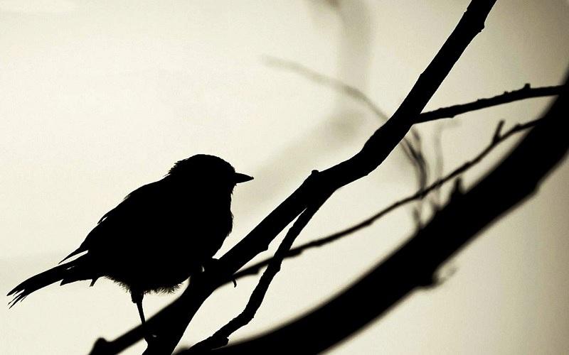 2603_bird-shadow.jpg