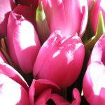 bouquet-15308_960_720