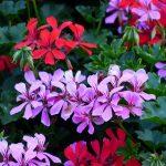flowers-143429_960_720
