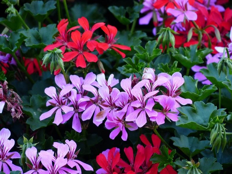 flowers-143429_960_720.jpg