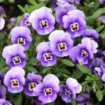 flowers-200270_960_720