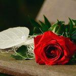 rose-1711224_960_720