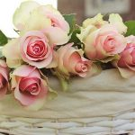 roses-2208357_960_720