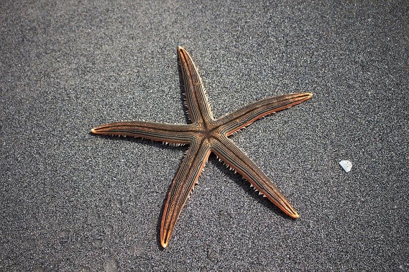 sea-star-1501698_960_720.jpg