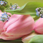 tulips-2167753_960_720