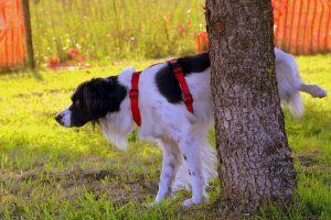 dog-1694209_960_720.jpg