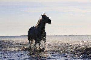 horse-1401914_960_720.jpg