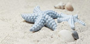 starfish-2423999_960_720.jpg