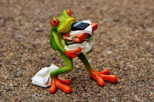 frog-1339892_960_720.jpg