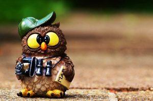 owl-964011_960_720.jpg