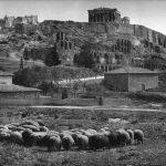 provara akropoli