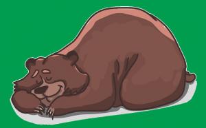 bear-2079672_960_720.png