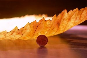 elm-leaf-231857_960_720.jpg