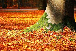fall-foliage-1913485_960_720.jpg