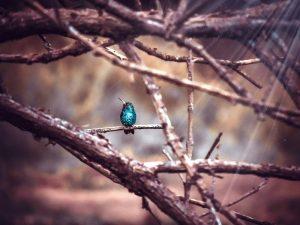 hummingbird-2663826_960_720.jpg