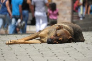 dog-2399764_960_720.jpg