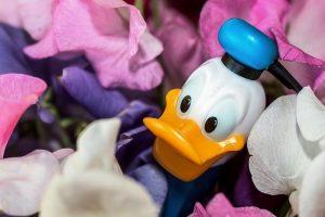 donald-duck-973226_960_720.jpg