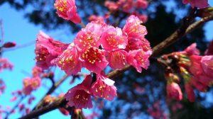 flowers-2808595_960_720.jpg