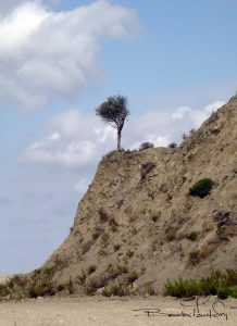 LONELY-TREE-B.jpg