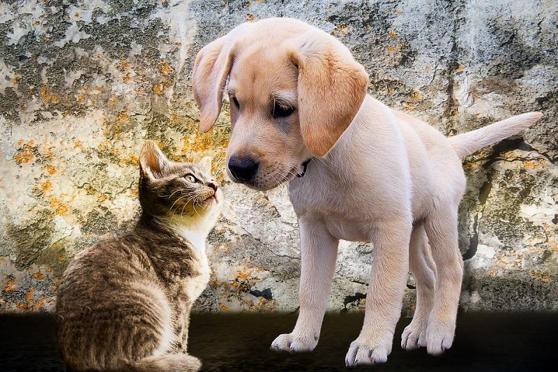 animals-2198994_960_720.jpg