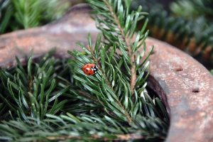 ladybug-1105828_960_720.jpg